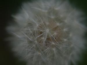 P5020112.jpg
